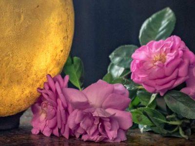 rose-damas-photo-by-derrick-evans