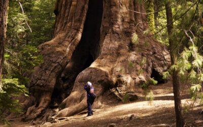 sequoia_geant-photo-by-geir-edland