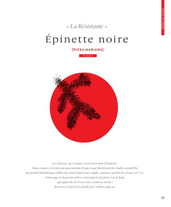 Epinette-noire-picea-mariana