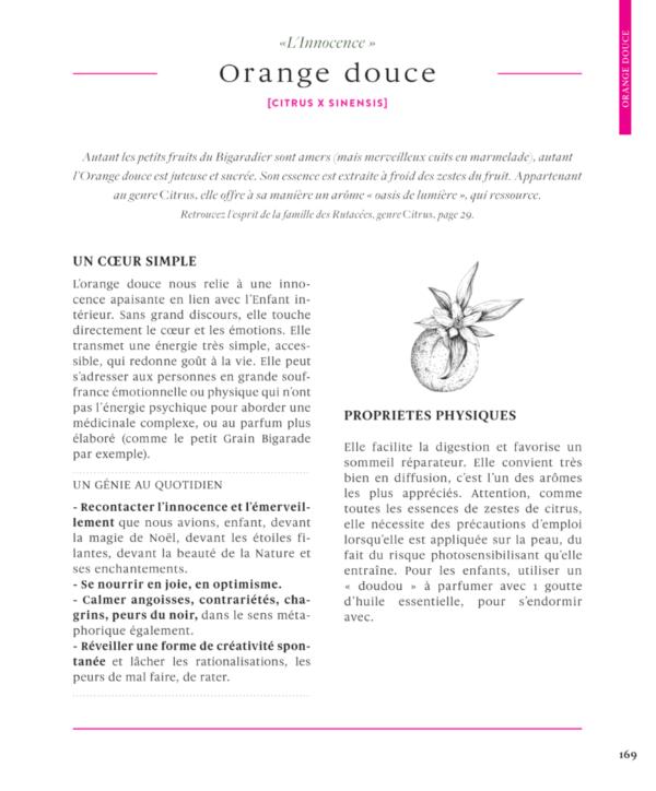 Orange-douce-citrus-sinensis