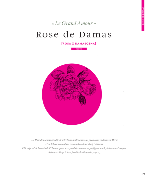 Rose-Damas-Le-grand-livre-des-huiles-essentielles