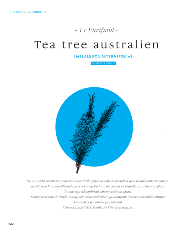 Tea-tree-australien-Melaleuca-alternifolia