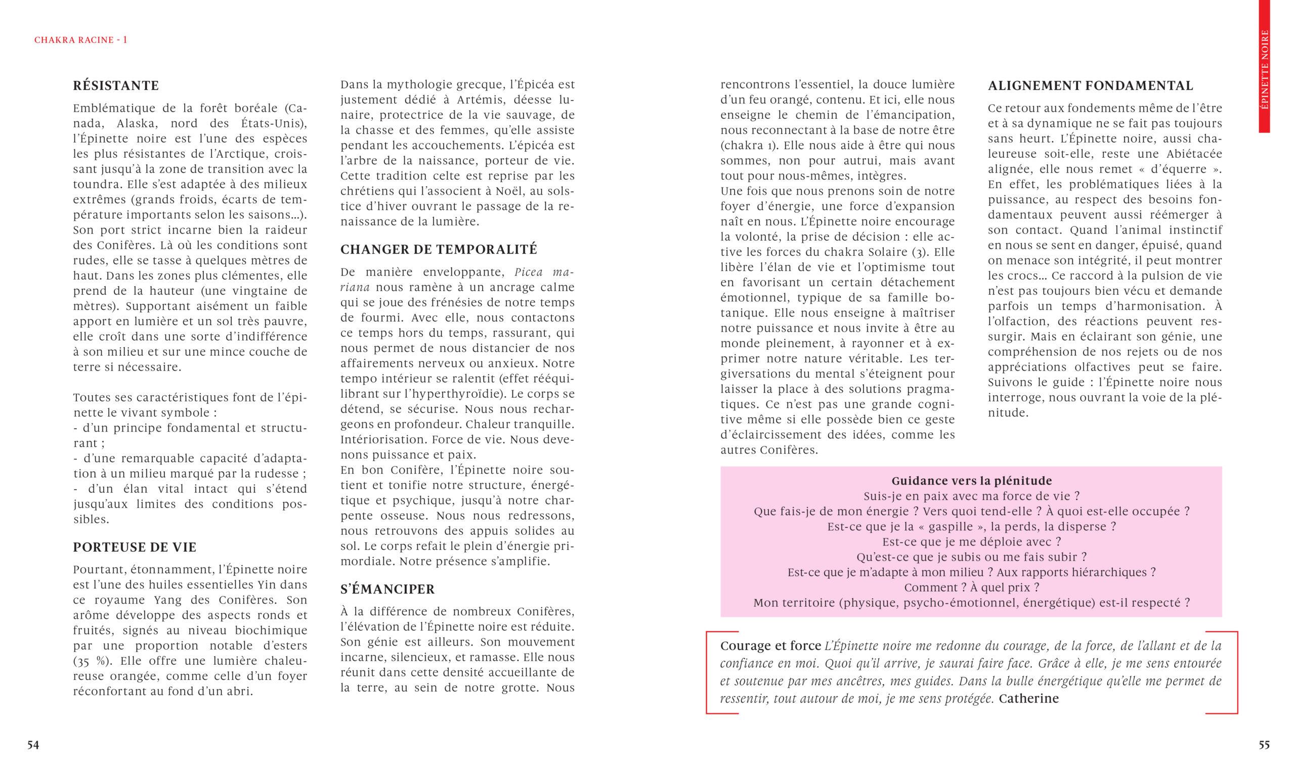 Epinette-noire-Le-grand-livre-des-huiles-essentielles